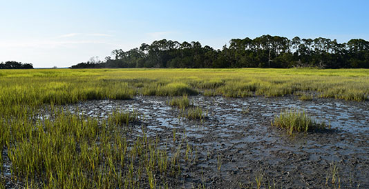 """coastal squeeze of salt marshes environmental sciences essay Coastal squeeze of salt marshes refers to any situation in which the coastal  margin, which is the area buffering land and sea is """"squeezed""""."""