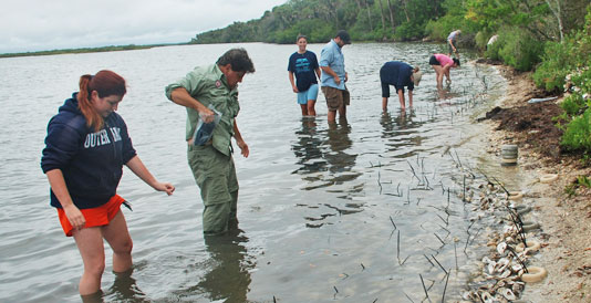 Volunteers planting living shoreline to protect Turtle Mound from water erosion and sea level rise.